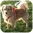 Photo 1 - Tibetan Spaniel Mix Dog for adoption in El Cajon, California - BUDDY