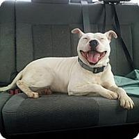 Adopt A Pet :: Genie - Woodlawn, TN