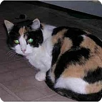 Adopt A Pet :: Savannah - Pascoag, RI