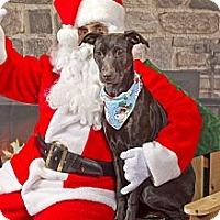 Adopt A Pet :: Libby - Burr Ridge, IL