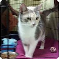 Adopt A Pet :: Camilla - Fort Lauderdale, FL