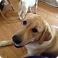 Adopt A Pet :: Jasper - Burr Ridge, IL