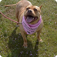 Adopt A Pet :: Kali - Aurora, CO
