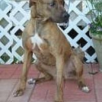 Adopt A Pet :: Anna - Jackson, MS