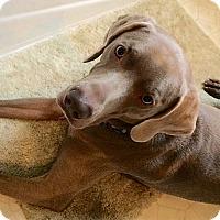 Adopt A Pet :: Molon - Grand Haven, MI