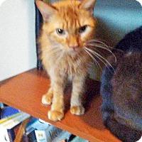 Adopt A Pet :: Peanut - Marion, NC