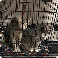 Adopt A Pet :: Lovie and Max - Virginia Beach, VA