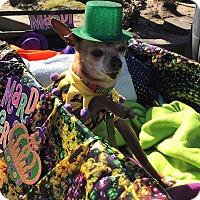Adopt A Pet :: Harrison - Sacramento, CA