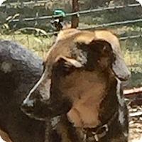 Adopt A Pet :: Jemima - Sacramento, CA