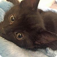 Adopt A Pet :: Mudslide - Troy, MI