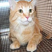 Adopt A Pet :: HAWKEYE - Aurora, IL
