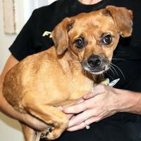 Adopt A Pet :: Frankie - Enterprise, AL
