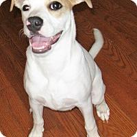 Adopt A Pet :: Lucy - Somerset, KY