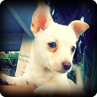 Adopt A Pet :: Sydney - Tijeras, NM