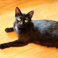 Adopt A Pet :: NEFERTITI - Franklin, TN