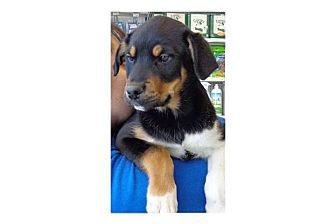 Husky Mix Puppy for adoption in Pompton Lakes, New Jersey - Davey