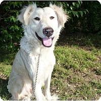 Adopt A Pet :: Truman - Mission Hills, CA