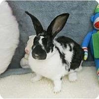 Adopt A Pet :: Trooper - Roseville, CA