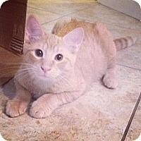 Adopt A Pet :: Cheeto - Sunrise, FL