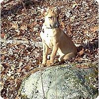 Adopt A Pet :: Riley - New Boston, NH