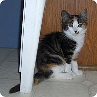 Adopt A Pet :: Starlight - Richmond, VA