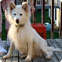 Adopt A Pet :: Ashley - Holland, MI