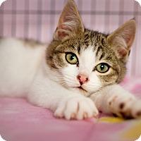 Adopt A Pet :: Andy - Shelton, WA