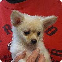 Adopt A Pet :: Polly - Murphy, NC