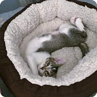 Adopt A Pet :: Maggie - Colmar, PA