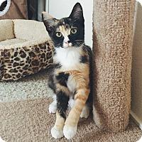 Adopt A Pet :: Puddles - Modesto, CA