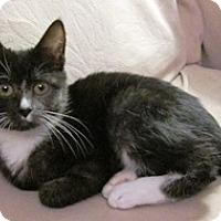Adopt A Pet :: Bindi - Lebanon, PA