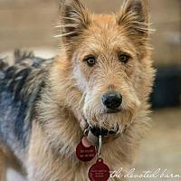Adopt A Pet :: Tara - Newport, MI