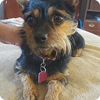 Adopt A Pet :: Sasha - Indianapolis, IN