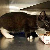 Adopt A Pet :: ASHE - Conroe, TX