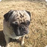 Adopt A Pet :: Obi - Strasburg, CO