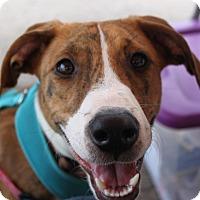 Adopt A Pet :: Scarlett - Jackson, TN