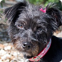 Adopt A Pet :: Tooty - Rockport, TX