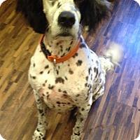 Adopt A Pet :: Camper - Huntsville, TN