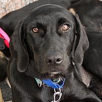 Adopt A Pet :: Rozlyn - Richmond, VA