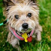 Adopt A Pet :: Olivia - Arlington, VA