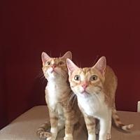 Adopt A Pet :: Geo (bonded w/ Sam) - Alexandria, VA