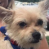 Adopt A Pet :: Ricky *Adopt or Foster * - Fairfax, VA