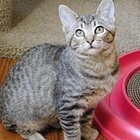 Adopt A Pet :: Cara - Davis, CA