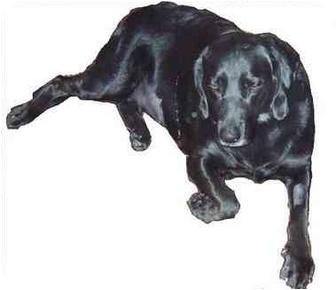 Labrador Retriever Mix Dog for adoption in Coudersport, Pennsylvania - KELLY