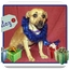 Photo 1 - Chihuahua Mix Dog for adoption in San Clemente, California - Marley
