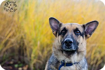 German Shepherd Dog Mix Dog for adoption in Howell, Michigan - Jayda