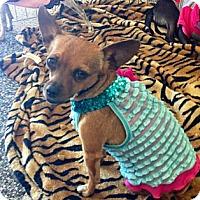 Adopt A Pet :: Nina - Oceanside, CA