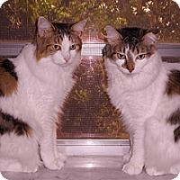 Adopt A Pet :: Millie and Tillie - Miami, FL