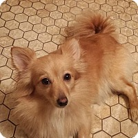 Adopt A Pet :: Chloe - Fayette City, PA
