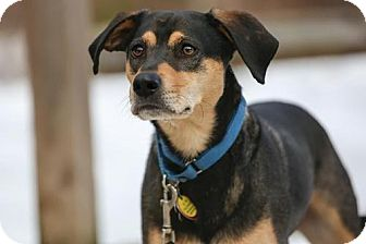 Bluetick Coonhound Mix Dog for adoption in Cary, North Carolina - LB